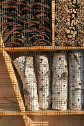 Bienenhotel bauen: Holzstämme längs anbohren
