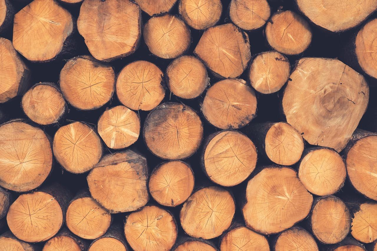 Holz für das Schwedenfeuer auswählen