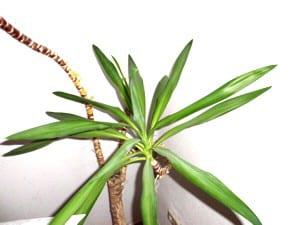 Anleitung: Palmen überwintern im Freien