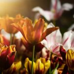 Der Traum vom schönen Blumenbeet - mit wenig Aufwand ein Blütenparadies schaffen